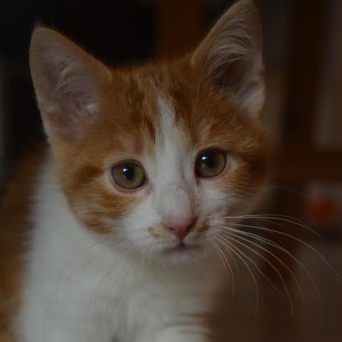 cat.frieda