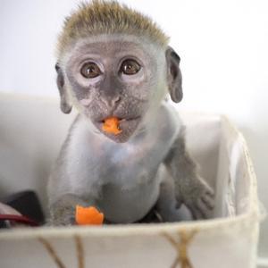 Mojo the monkey