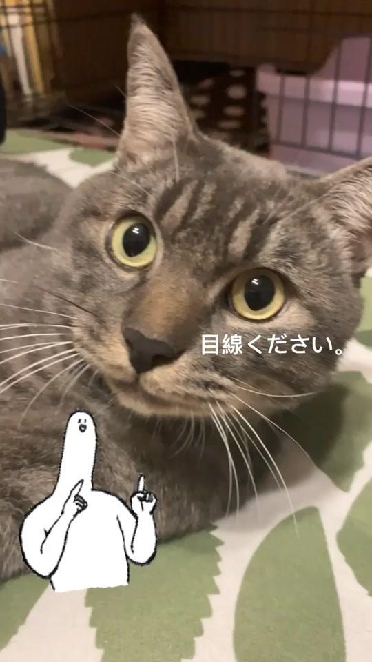 @たむちゃん